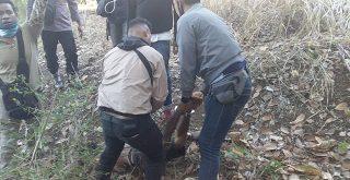 Polisi menangkap pelaku pembunuhan anak kandung di Desa Balaweling Noten, Adonara-NTT, setelah 12 jam bersembunyi diatas pohon. Foto: Lintasnusanews.com/Dok.Polres Flotim